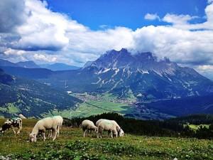 Blick vom Grubigstein auf die Zugspitze.